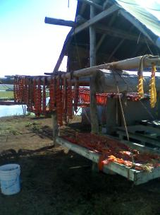 Fish drying on rack in Alaskan village