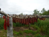 Red salmon drying on racks